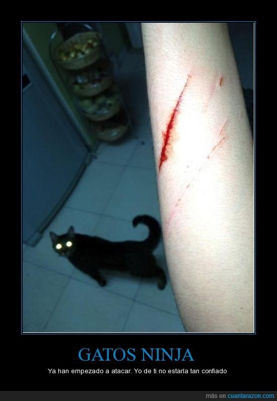 arañazo,ataque,corte,gato,ninja,uña