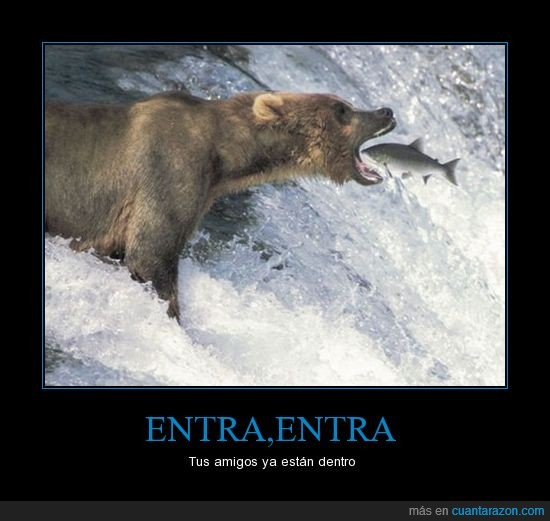 directo a la boca,entra,oso,pez,salta