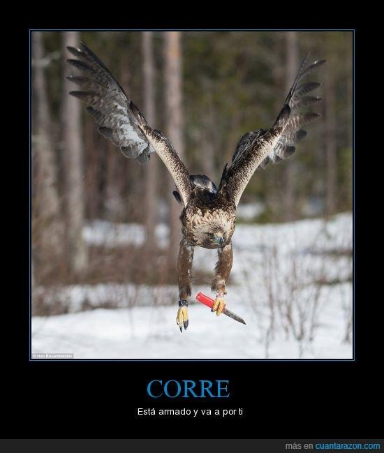 agarra,águila,arma,cuchillo,doblemente letal