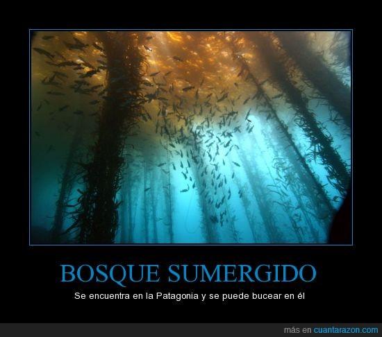 bosque,bucear,mar,patagonia,peces
