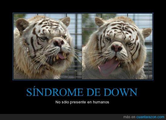 down,especie,humano,mental,sindrome,tigre