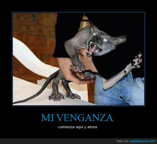 demonio,Gato,miedo,poseido,satanaaaas,venganza