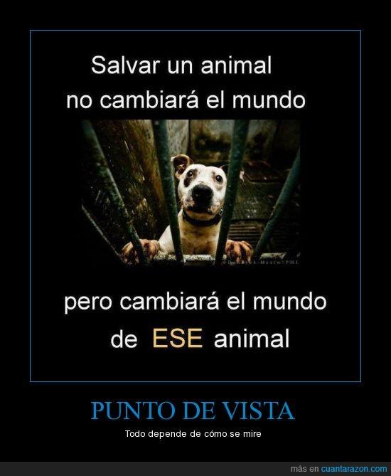 animal,mundo,perro,razón,salvar,vida