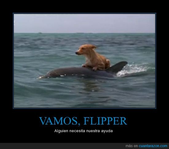ayuda,delfin,flipper,perro,son heroes