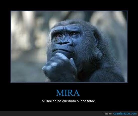 cielo,gorila,mirar,mono,paece que a llovu