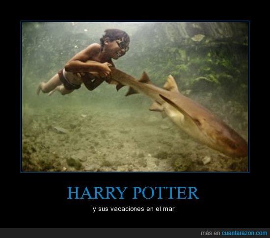 amansar,harry potter,mar,tiburones,veranear
