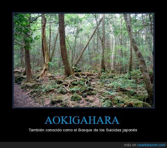 árboles,bosque,japón,suicidio