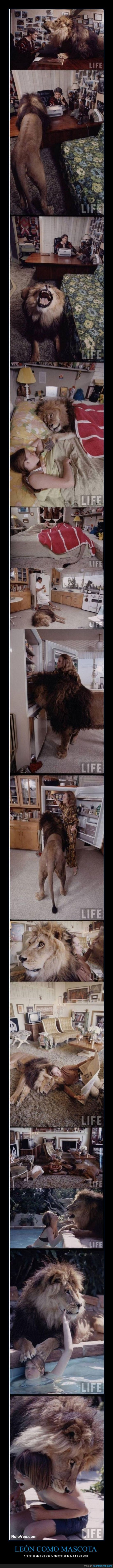 amigos,gato,león,mascota,niños