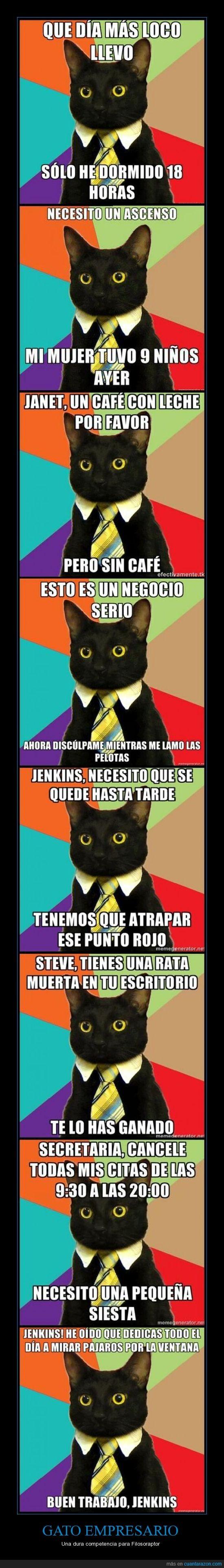 filosorraptor,gato empresario,trabajo
