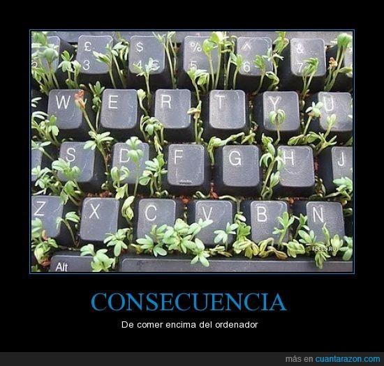crece,flor,ordenador,planta,semillas,teclado