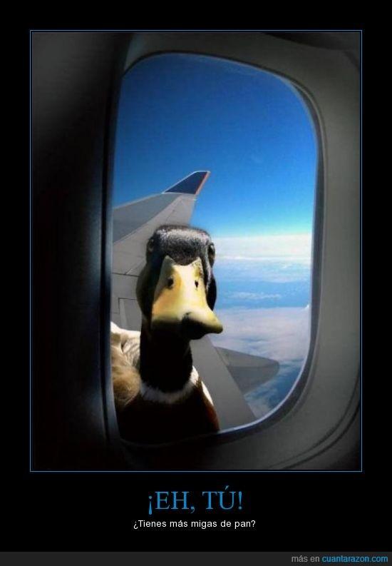 avion,más,miga,pan,pato,tengo hambre