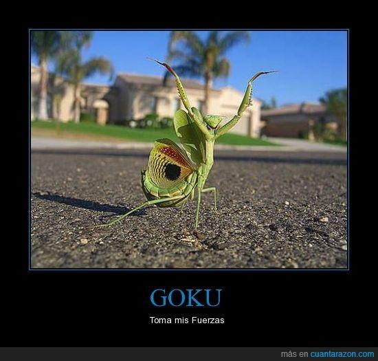 amarillo,bicho,genki dama,goku,insecto,mantis,ojo,todos juntos,verde