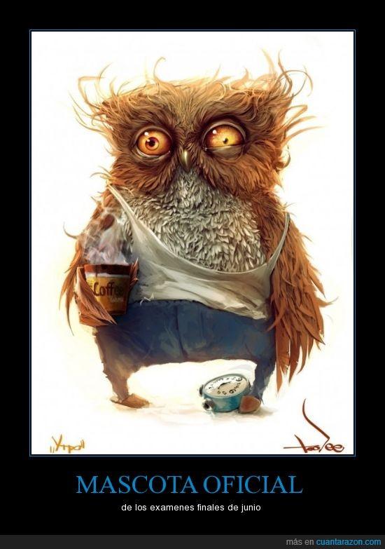 café,exámenes,finales,junio,lechuza,mascota,oficial