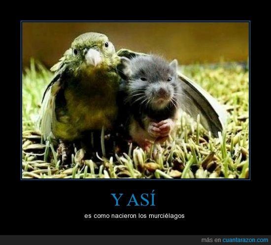 animales,mira Vampi ... Así fue como conocí a tu madre,murcielago,pajaro,raton,vampiro