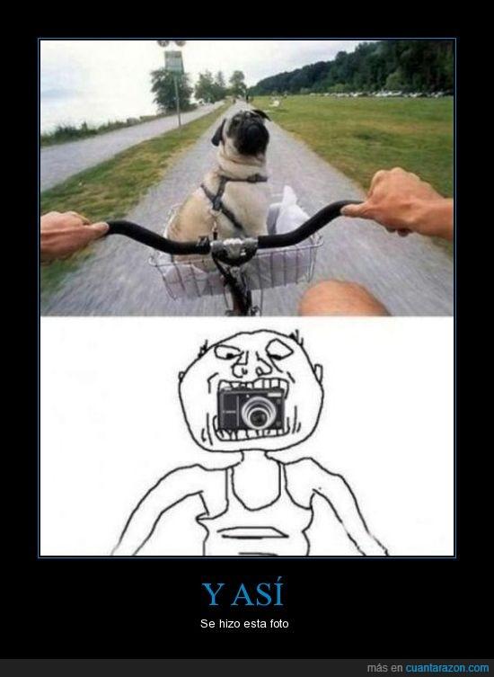 bicicleta,calle,camara,foto,hombre,perro