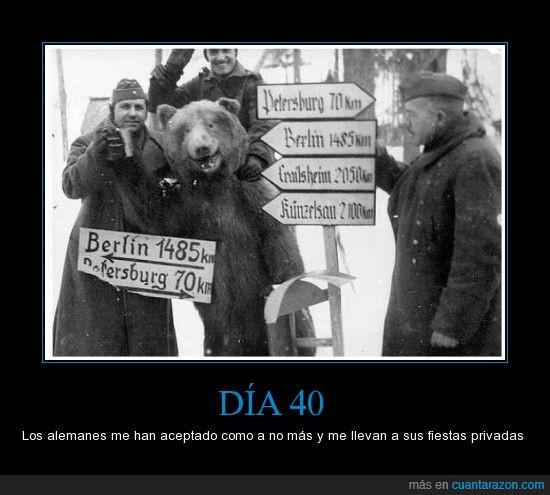 alemanes,disfraz,nazis,osos,soldados