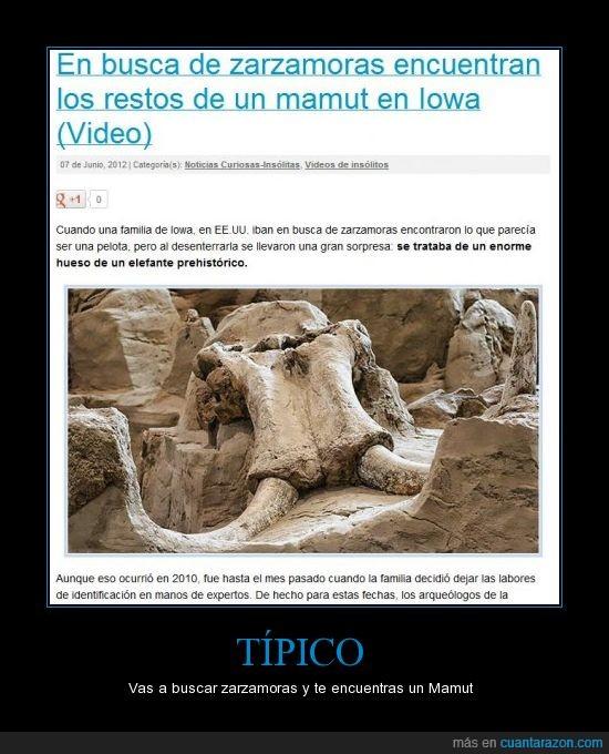 elefante,Iowa,mamut,típico,zarzamoras