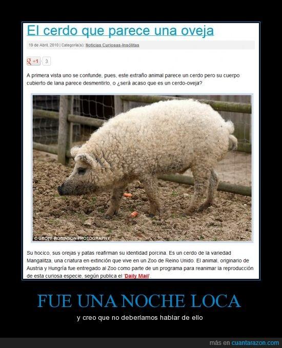 cerdo,fusion,noche loca,oveja