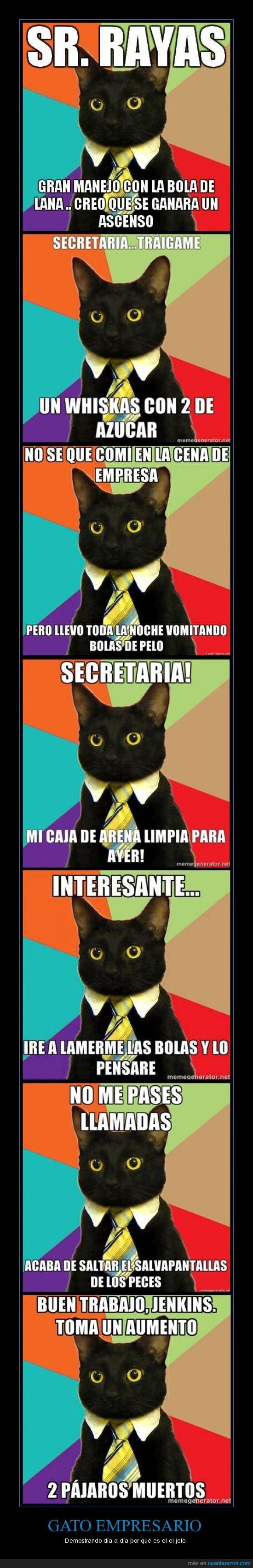 bolas de pelos,corbata,empresario,gato,jenkins,secretaria,whiskas