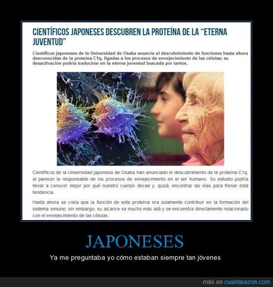 celula,descubre,envejecimiento,estudio,eterna,japon,juventud,parar,proteina