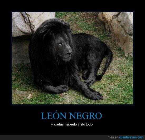 animal,completo,leon,negro