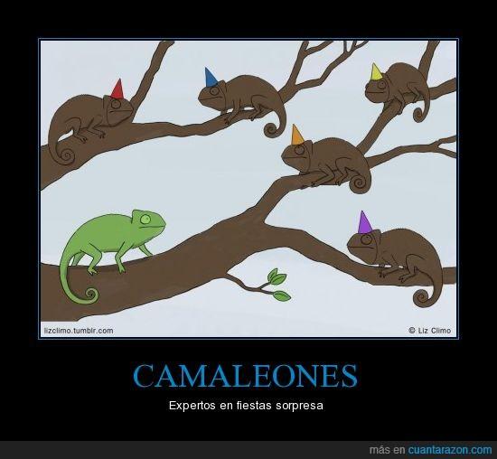 camaleones,expertos,fiesta