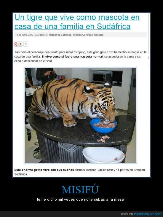gato grando,mesa,misifu,tigre