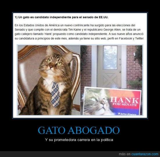gato,gato abogado,hank,inicios