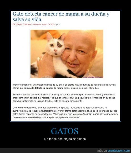 Gato ninja cancer vida