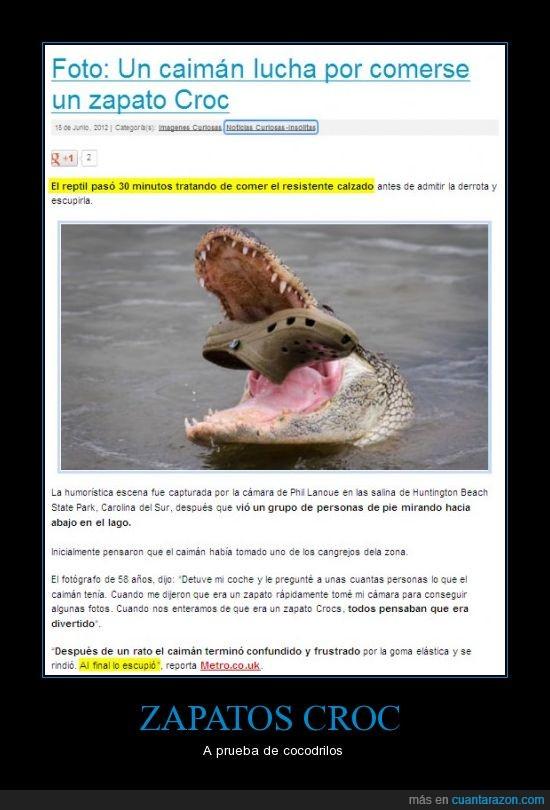 caiman,chuck norris,cocodrilo,croc,zapato