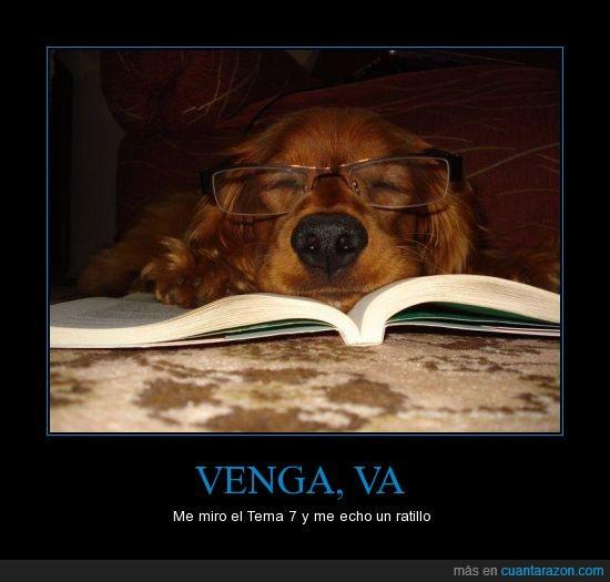 estudio,examen,gafas,leer,libro,perro,repaso
