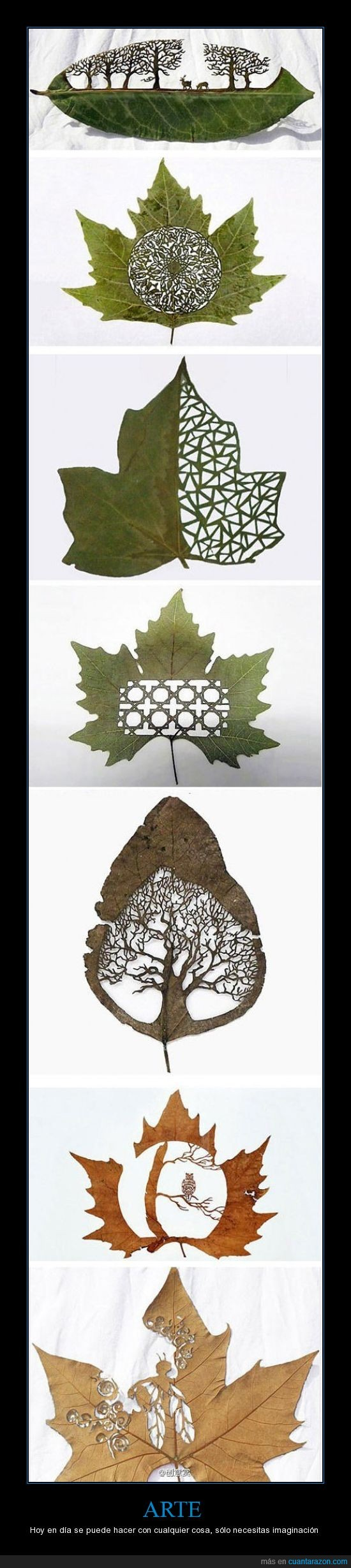 artes,corta,forma,hojas,imaginación,lorenzo duran