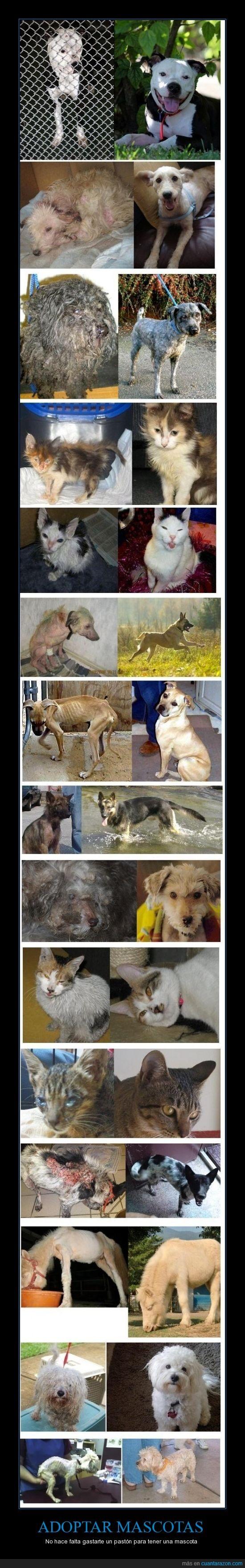 adopcion,gato,mascotas,perro