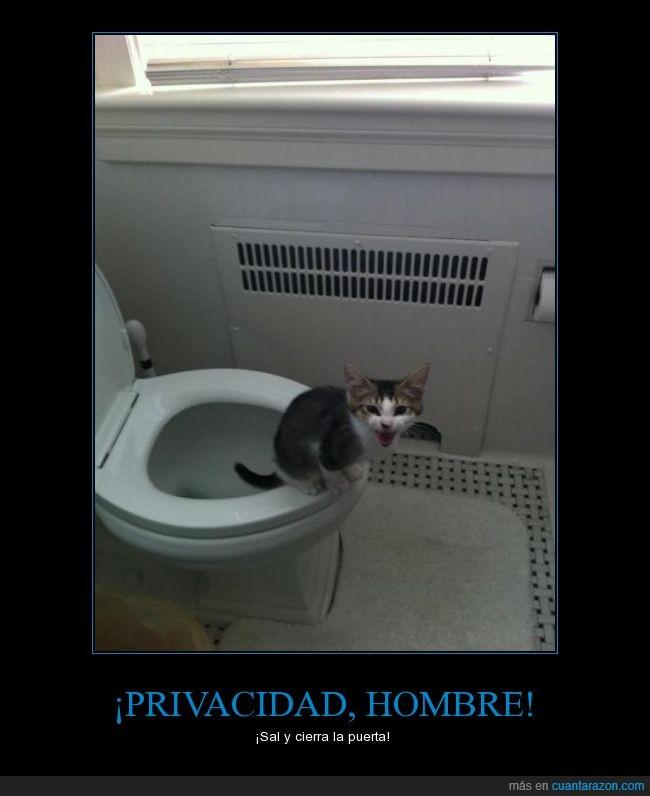 gato,lavabo,puerta,taza,vater,wc