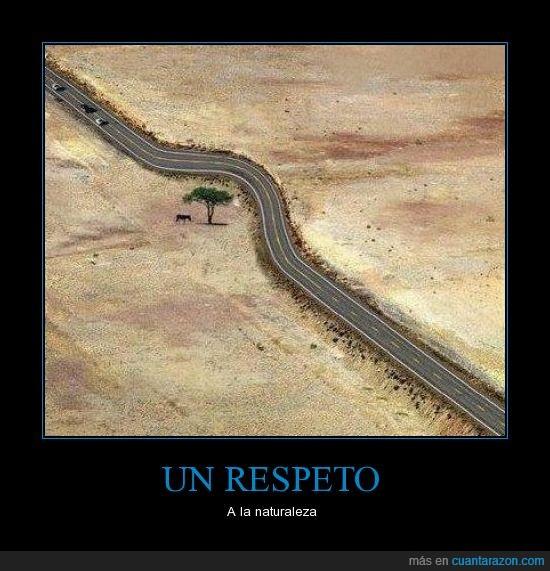 arbol,carretera,desierto,desviación,humano,realidad,reflexion