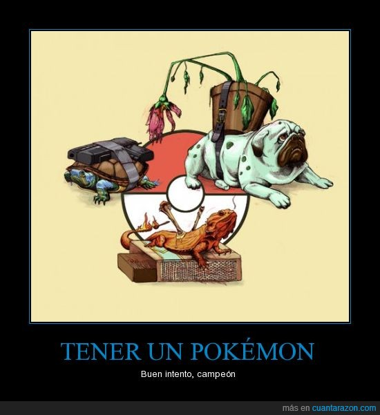 Bulbasaur,Charmander,lagarto,objetos,perro,Poké Ball,Pokémon,Squirtle,tortuga