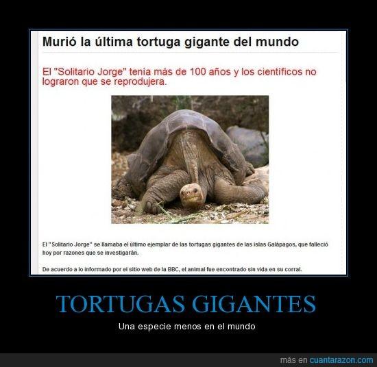 extinción,Tortugas galápagos,triste