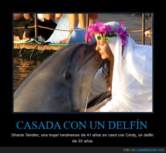 amor,casada,delfín,sharon tendler