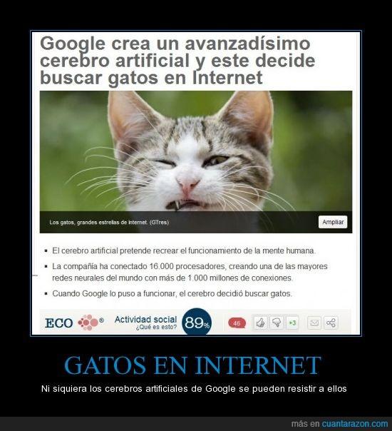 cerebro artificial,gatos,google,internet