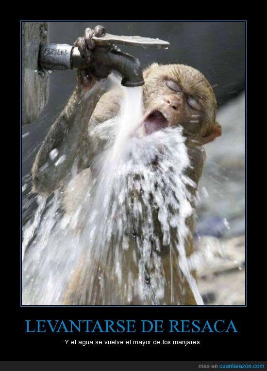 agua,bebe,domingo,hidrataciooooon,mono,resaca
