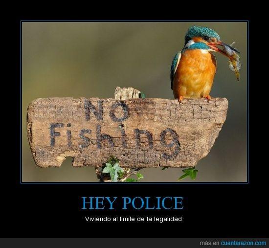 al límite,BOCA,pájaro,pescar,prohibido,señal