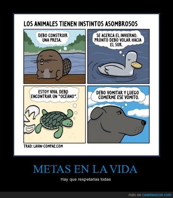 animales,castor,comer,oceano,pato,pensamientos,perro,presa,tortuga,volar,vomitar,vomito