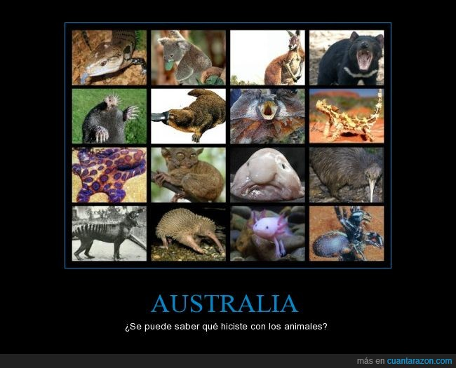 animales,australia,canguro,kiwi,koala,pulpo,que,raros