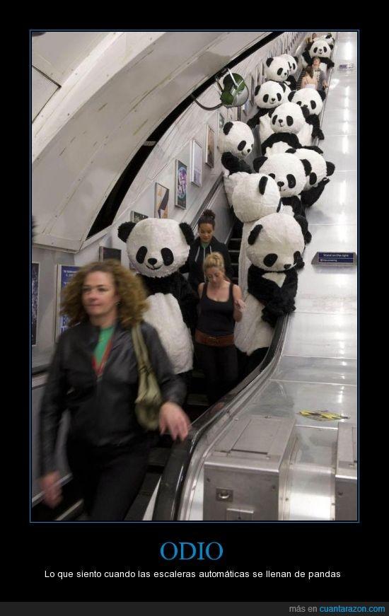 disfraz,metro,odio,pandas,tren,wtf