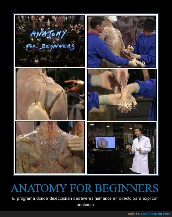anatomia,anatomia para principiantes,anatomy for beginners,cadaveres reales,diseccion,medicos