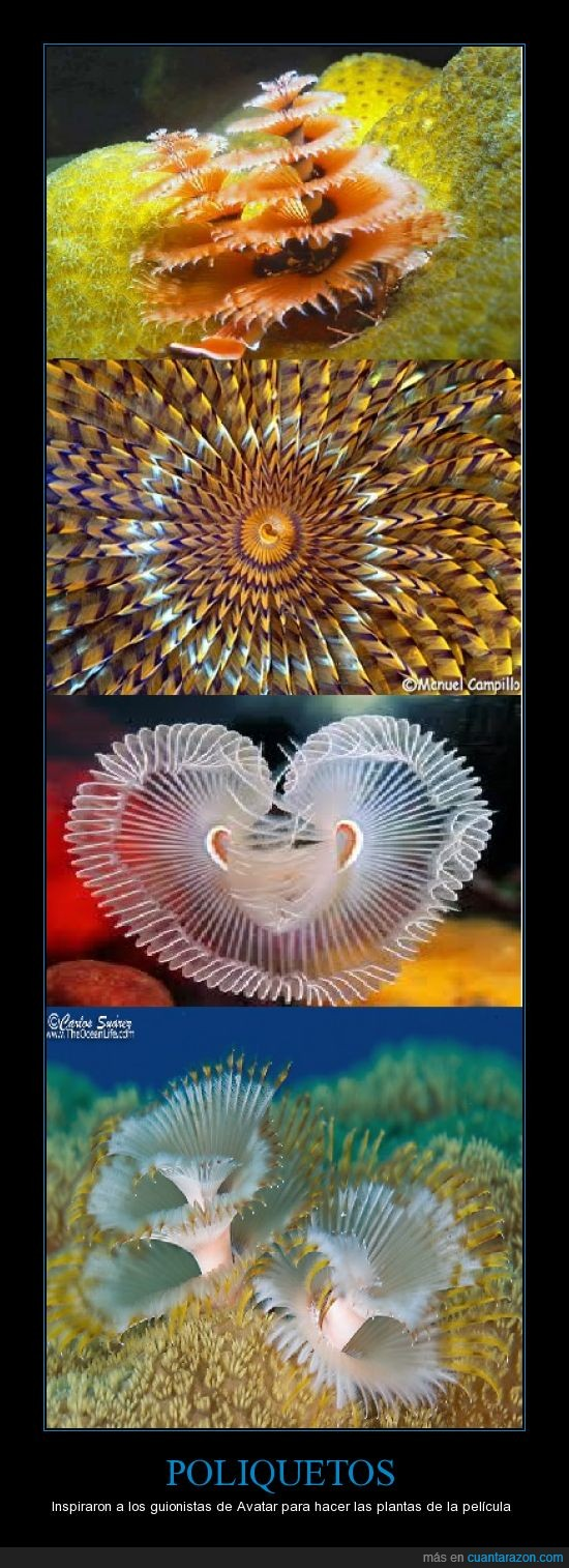 avatar,inspira,mar,pelicula,planta,Poliqueto