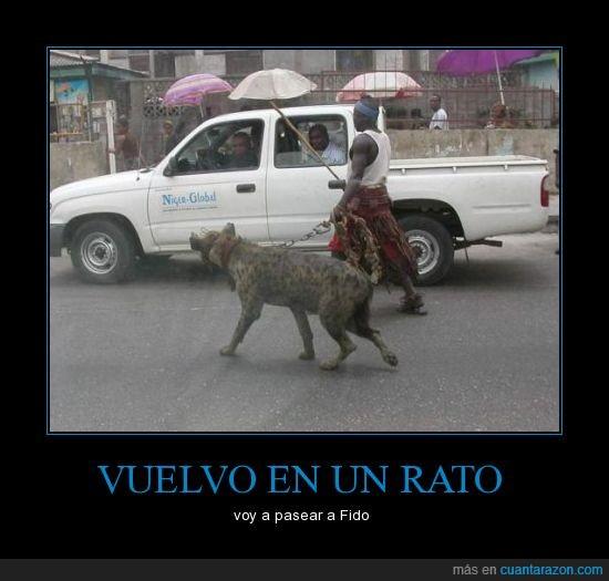 áfrica,fail,hiena,mascota,perro