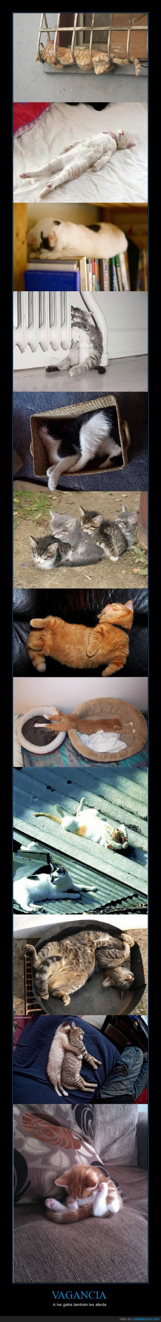 descanso,dormir,gatos,siesta,vagos,zzz