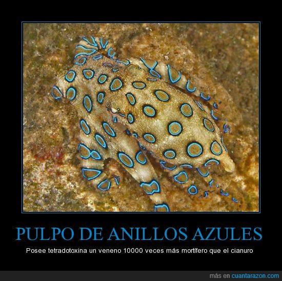 anillos,azul,cianuro,Pulpo,tetradotoxina,veneno