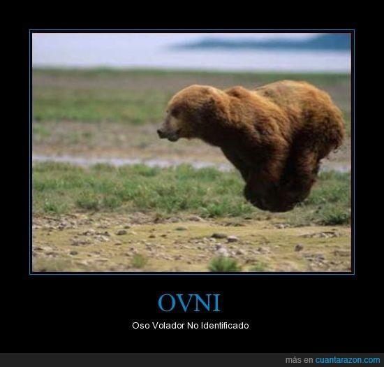 animal,oso,ovni,volar